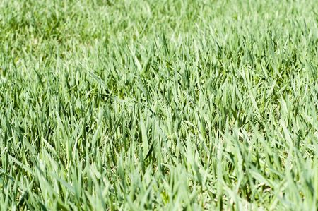 green grass cover as background Stock Photo - 5538917