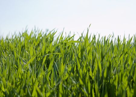 green grass and sky Stock Photo - 5539006