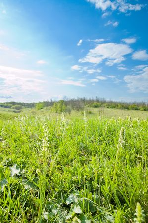 good green and blue color card nature meadow photo