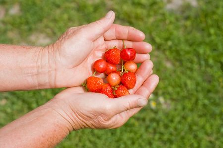 strawberry and cherry in hands photo