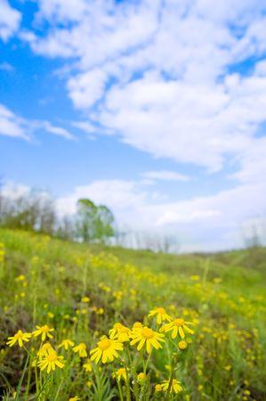 flowers on green meadow photo