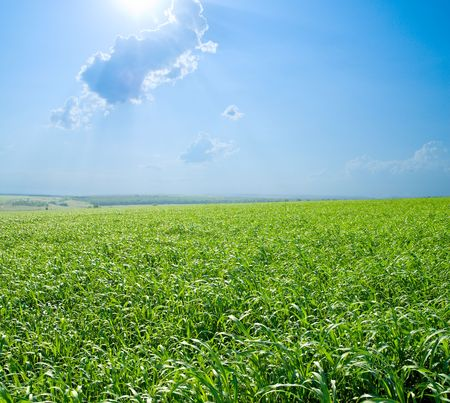 good green and blue color nature field photo
