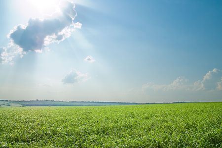 green grass and blue cloudy sky Stock Photo - 5563271