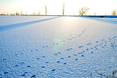 tracks in the snow at evening Stock Photo - 6087933