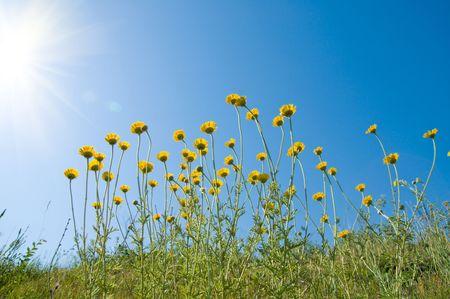 dia soleado: flores bajo sol