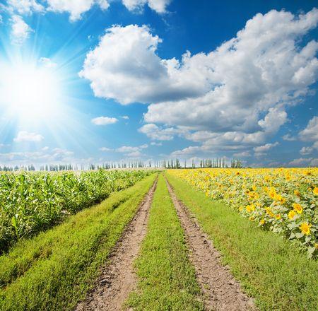 농촌 도로 위에 태양과 구름