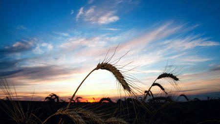 sunset on field at summer photo
