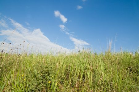 green grass and blue sky Stock Photo - 6475165