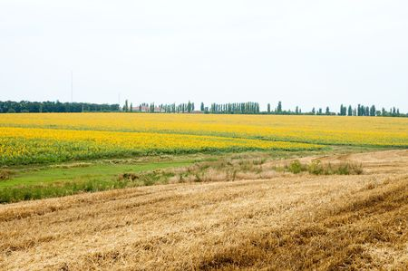 rural view with sunflowers and field after harvest Stock Photo - 6668089