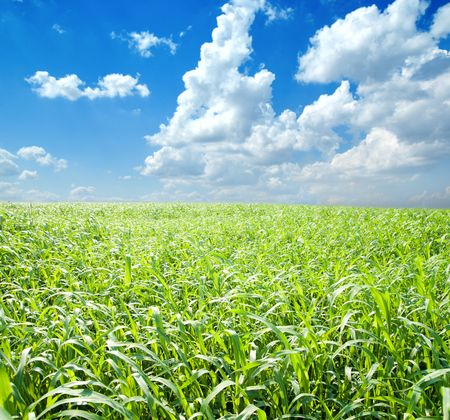 green grass and blue sky with clouds Stock Photo - 6818016