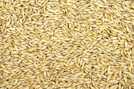 grain as good natural background Stock Photo - 6818019