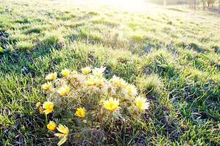 yellow flowers under sun rays in evening photo