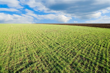 little green shots on field and blue sky in spring Stock Photo - 7118027