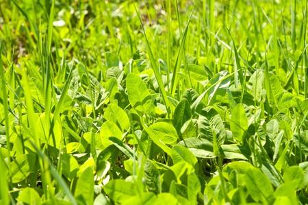 green grass under sunrays photo