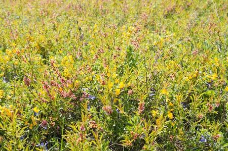 miscellaneous herbs photo