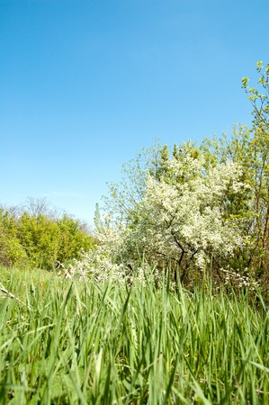 meadow in springtime photo