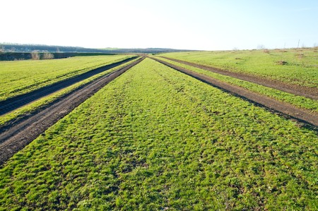 two rural roads in green grass Stock Photo - 7118024