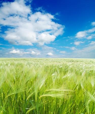 campo de trigo verde bajo cielo nublado