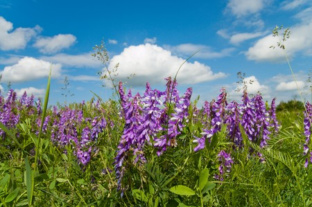 colorful wild flowers under good sky photo