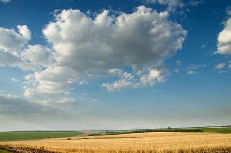 field of ripe wheat gold color and cloudy sky. south Ukraine photo