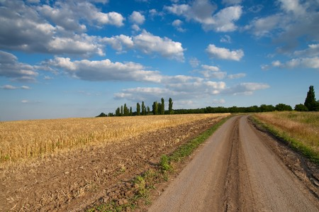rural road and field of wheat with low dark cloud photo