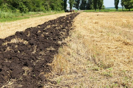 field after harvesting photo