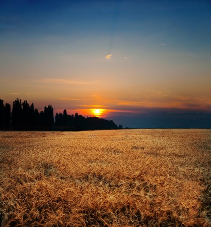 sunset on field at summer Stock Photo - 7558957