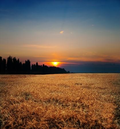 sunset on field at summer Stock Photo - 7558957