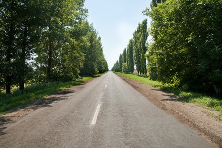 beetwen: Country road beetwen trees Stock Photo