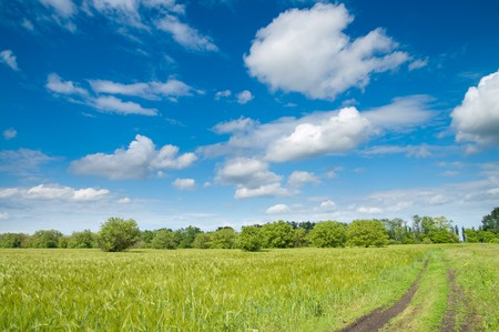 rural road in green field photo