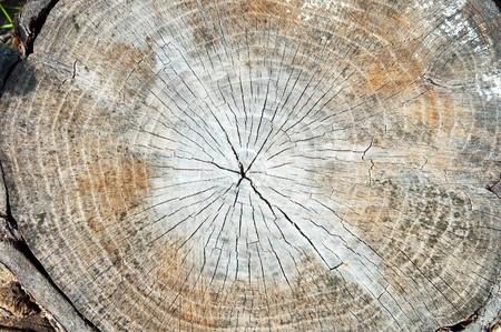 cut of tree photo