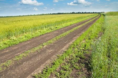 rural road in green field Stock Photo - 7629133