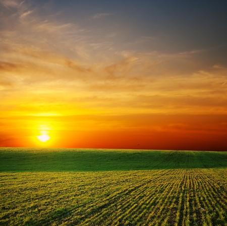 farmlands: last sunrays over green field
