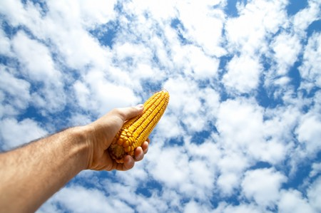 maize in hand under cloudy sky photo
