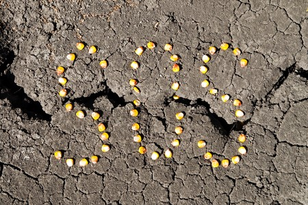 word SOS from grains of corn over cracked earth photo