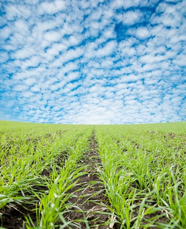 closeup of green field under cloudy sky Stock Photo - 7852168