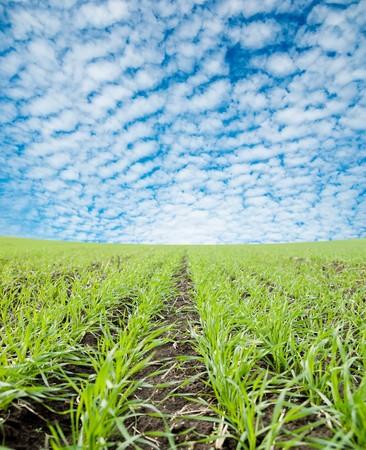 closeup of green field under cloudy sky Stock Photo - 7852168
