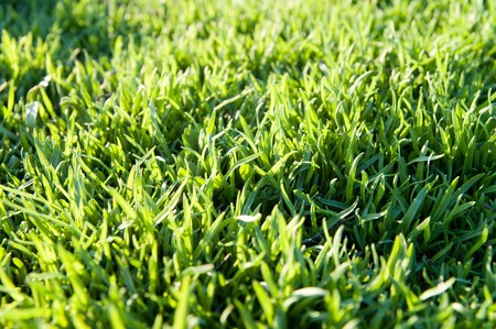 green grass as background photo