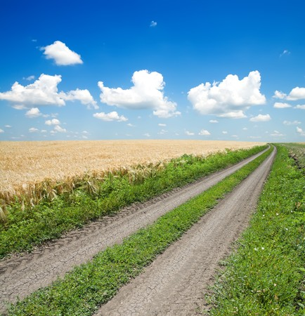 green field under beautiful dark blue sky Stock Photo - 8037515