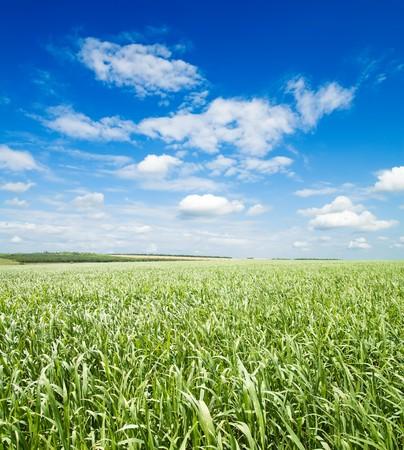green grass under cloudy sky photo