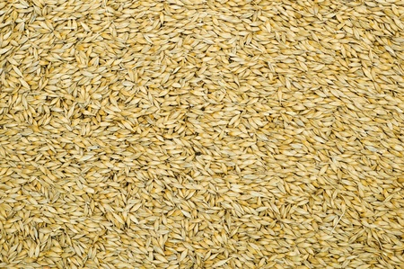 grain as good natural background photo