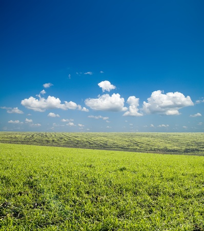 green field under deep blue sky with clouds photo