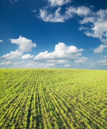 field of green grass and deep blue sky with clouds photo