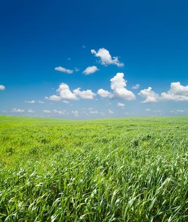 campo de c�sped verde y azul cielo con nubes