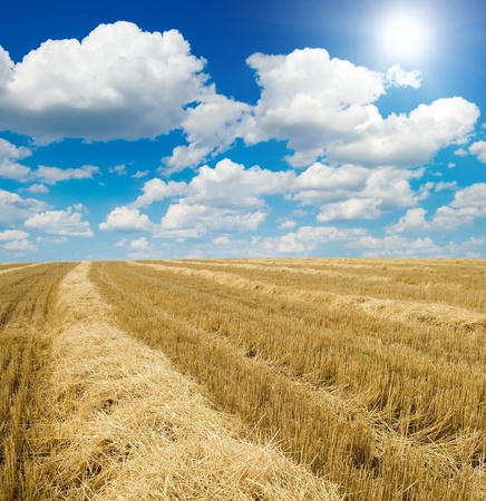 collected harvest on the field under sun photo