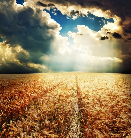 road in field with gold ears of wheat under sunrays photo