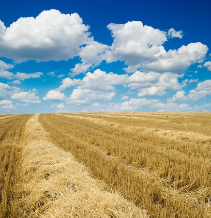collected harvest in windrows under cloudy sky Stock Photo - 8764514