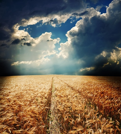 road in field with gold ears of wheat under hole in dramatic sky photo