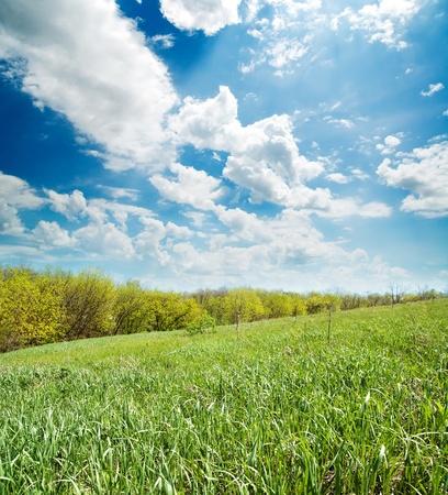 field of green grass near wood Stock Photo - 8764521