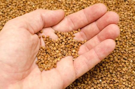 buckwheat in hand Stock Photo - 8949165